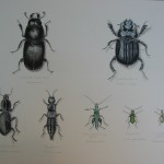 """Beautiful British Beetles"""