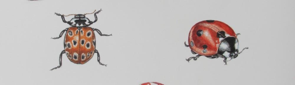 """""""Sketch Book Ladybirds"""""""
