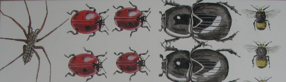 Cath Hodsman, British Wildlife and Natural History Artist