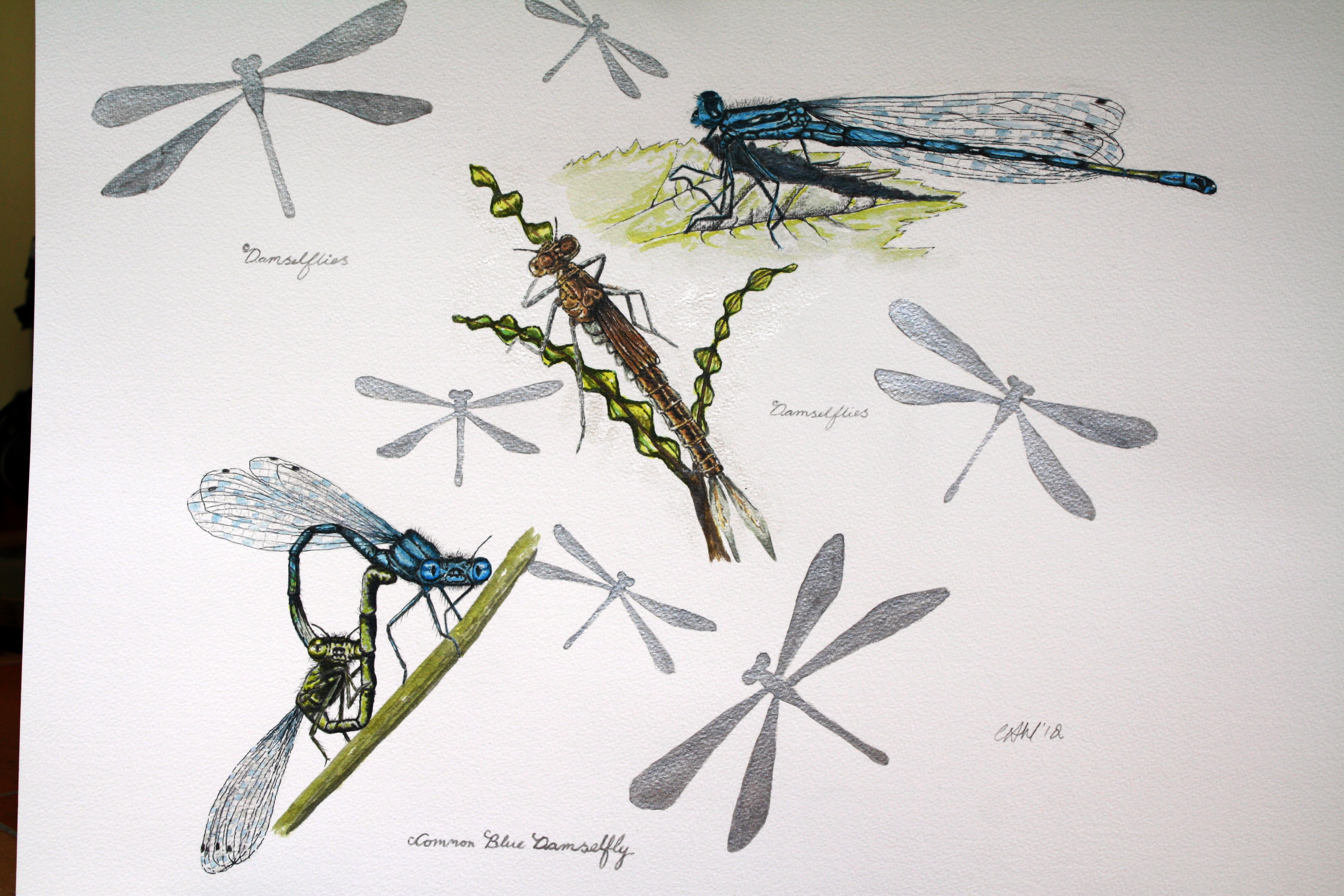 common blue damselfly lifecycle | Cath Hodsman, British ...