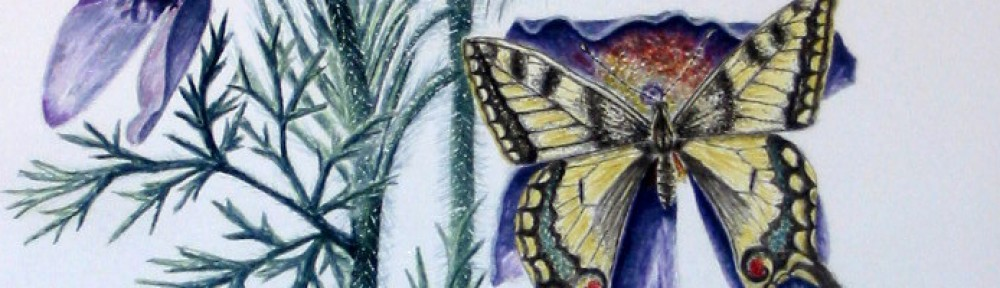 Cath Hodsman, British Wildlife and Natural History Artist
