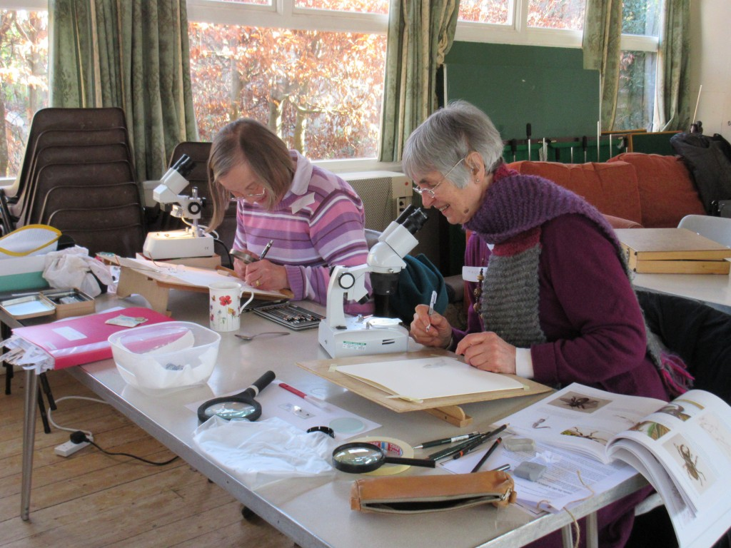 Botanical artists, hard-at-work